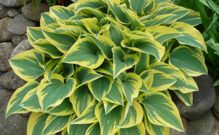 Schattenliebende Pflanzen teichbau bioteiche ökoteiche zierteiche kaufbeuren obergünzburg